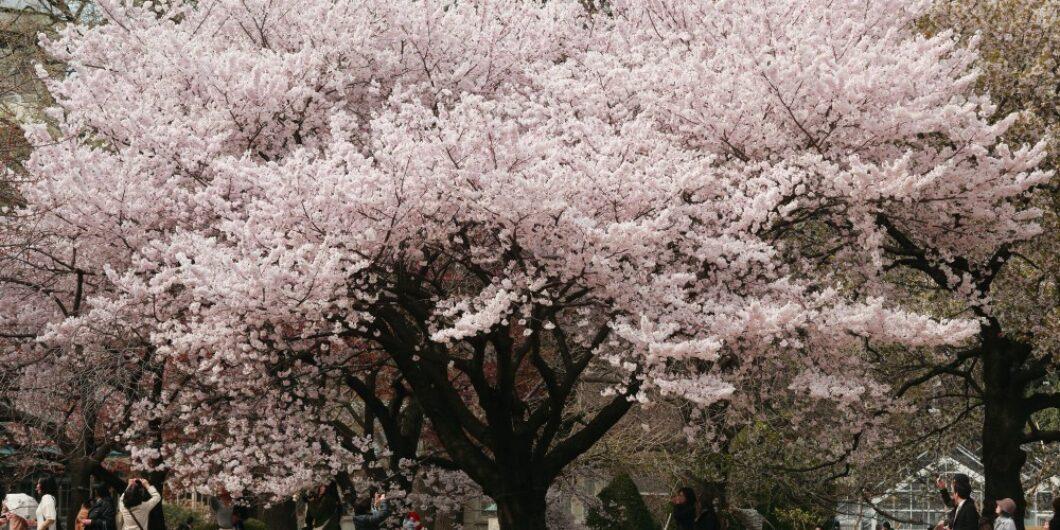SHINJYKU-GYOEN