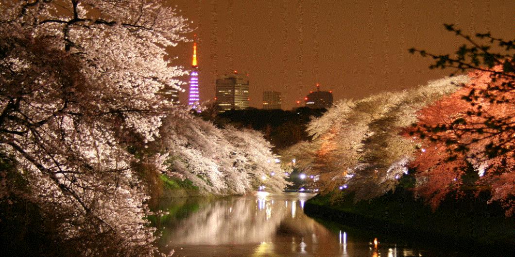 [ CHIDORIGAFUCHI-SAKURAMATSURI ] TOKYO-CHIYODAKU