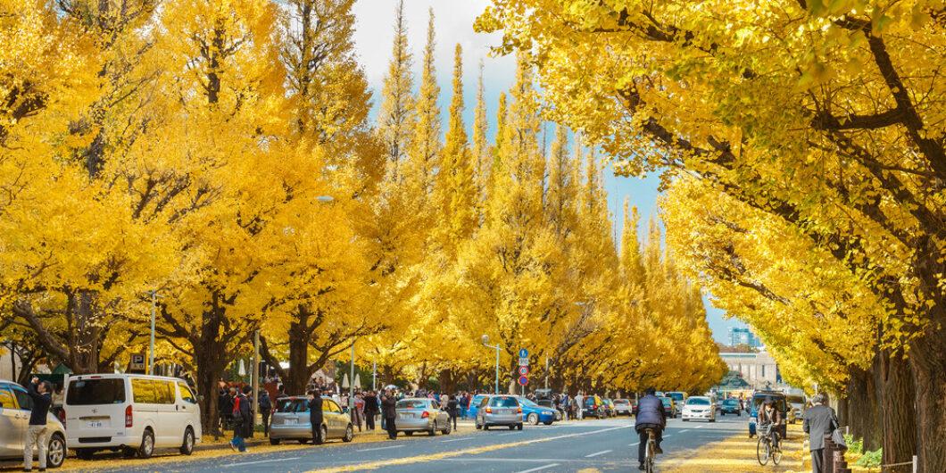 Autumn [ MEIJIJINGU-GAUEN ] SHIBUYA-KU
