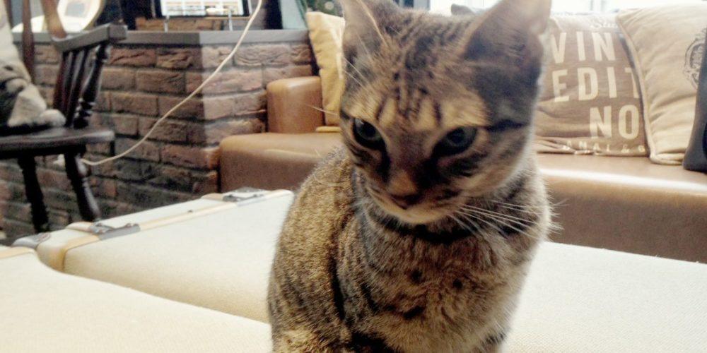 เล่นกับแมวที่ชิบูย่า(Cat Cafe Mocha@Shibuya)
