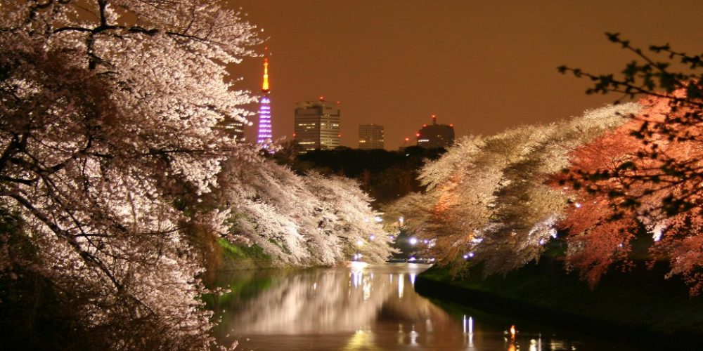 Tokyo Tower light up of sakura